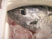 2008-12-Seafood-3.JPG