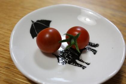 2010-07-30-Tomato_1804.JPG