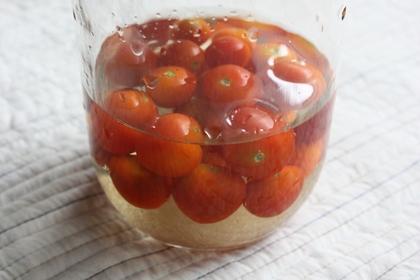 2010-07-30-Tomato_1939.JPG