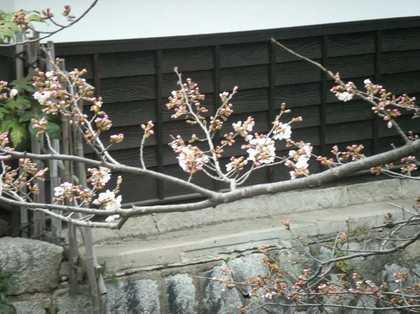 2010-03-Kurashiki-0006.JPG