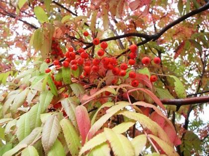 2011-10-20-Nanakama_0014.JPG