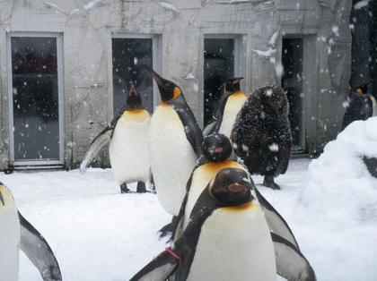 2011-11-22_Pingue.JPG