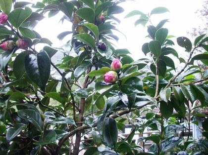 2012-01-12-2-Tsubo_0026.JPG