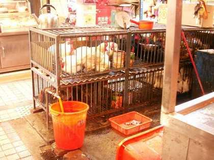 2012-12-3-Shiheigai_0056.JPG