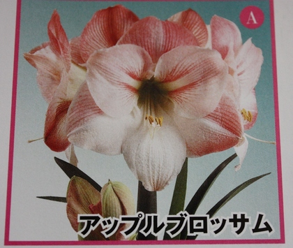 2013-02-13_5219.JPG