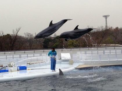 2013-02-28-Kyoto_Iruka2.JPG
