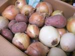 Onion-1.jpg