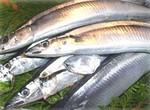 10秋刀魚のマリネ02.jpg